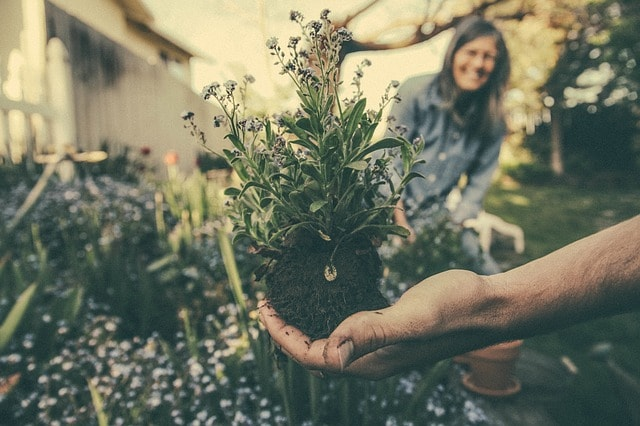Easy Home DIY Projects Gardening